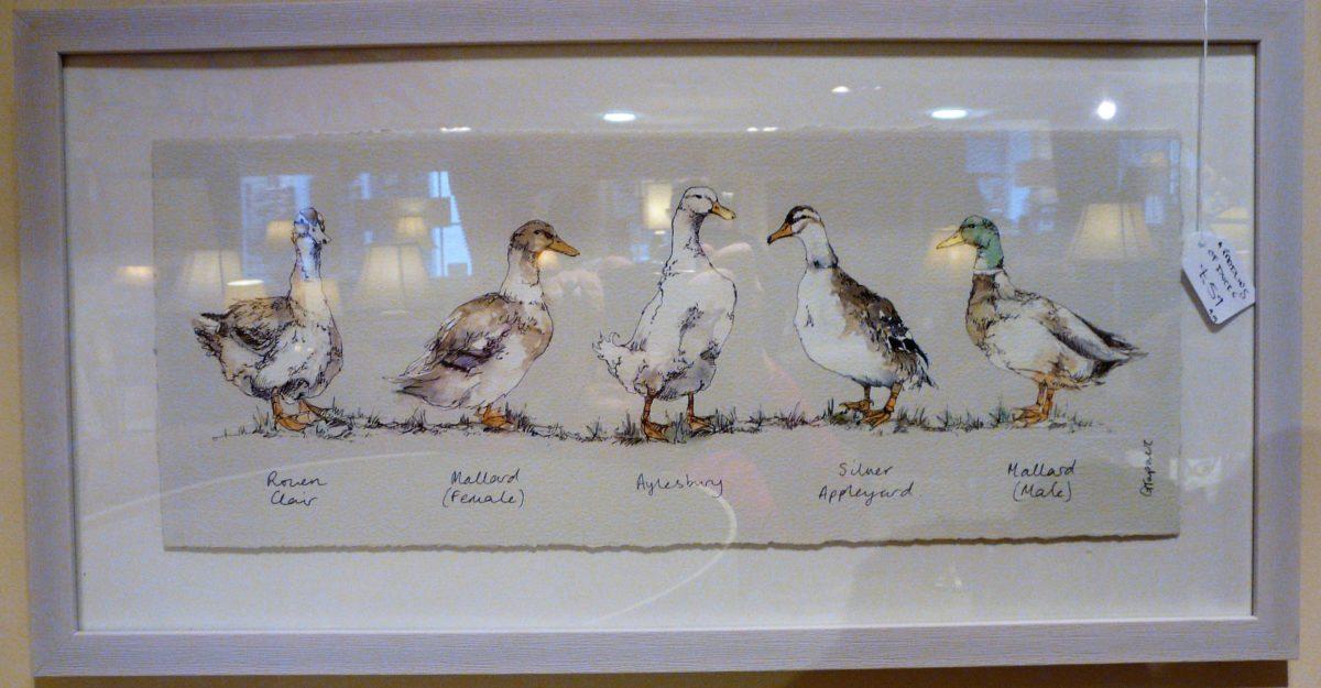 Duck print, wooden frame.